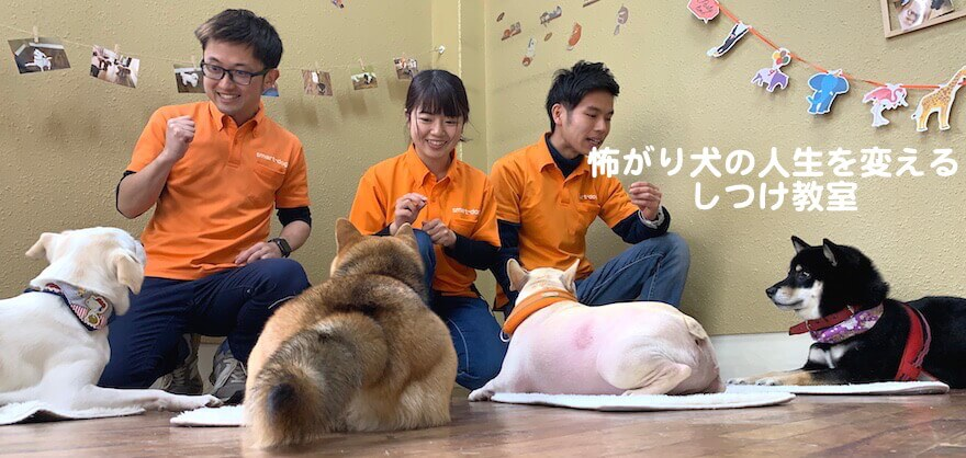 大阪で唯一!怖がり犬専門の幼稚園・訪問しつけはsmart-dogへ